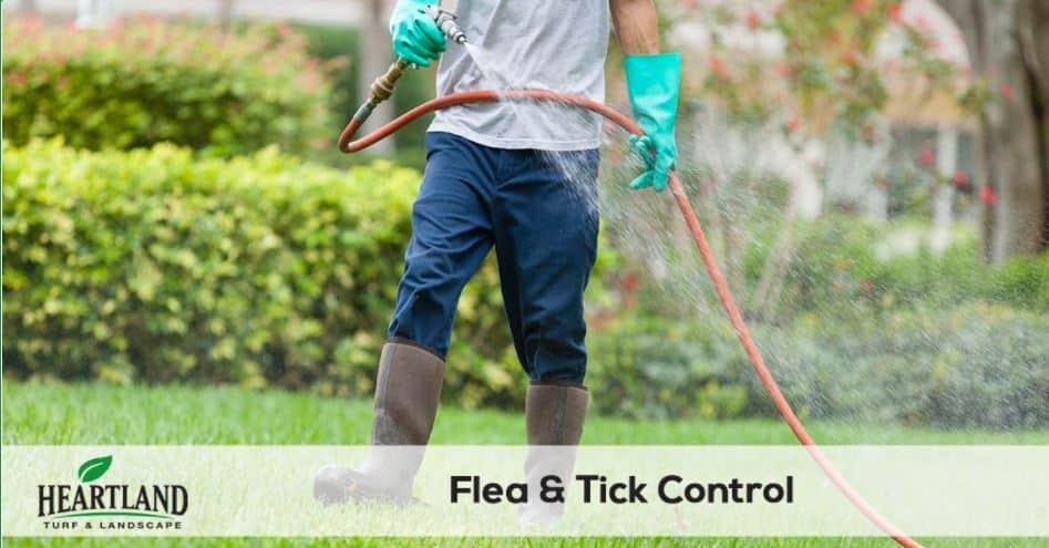 flea and tick control service 8