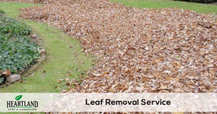 leaf removal service 4