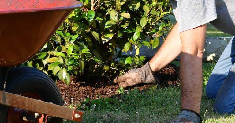 mulch installation 2