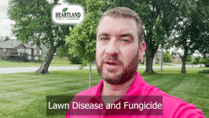 Lawn Disease and Fungicide