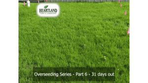 Overseeding Series - Part 6 - 31 days out
