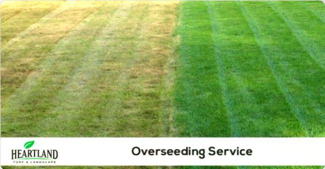 grass overseeding