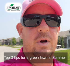 3 tips for a beautiful green lawn during the summer