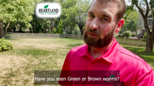 Protect your lawn from Army worms!