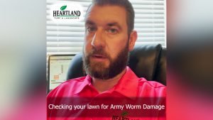 Expert explanation on how to check your lawn for Army Worm damage