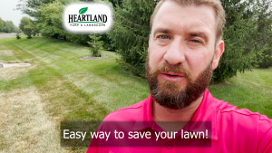 Stopping Lawn Damage is Easy with Fungicide Treatment