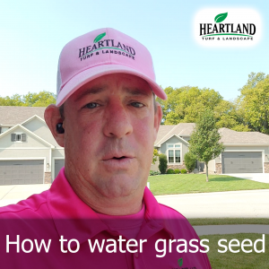 How to water grass seed
